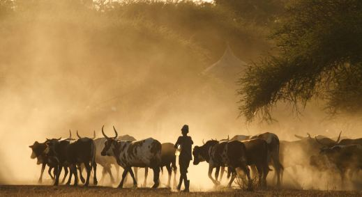africa-boy-with-cattle